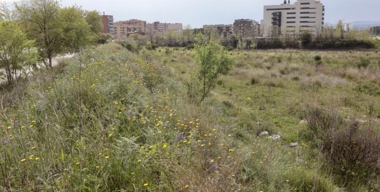 Terrenys on s'ha de construir l'Institut Can Llong