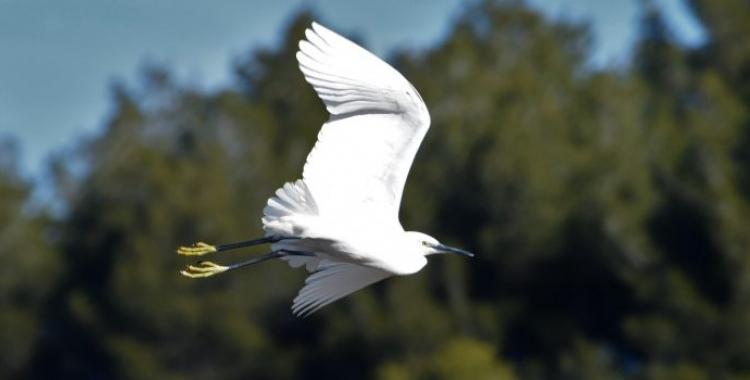 Imatge d'una de les aus del Ripoll/ Adenc