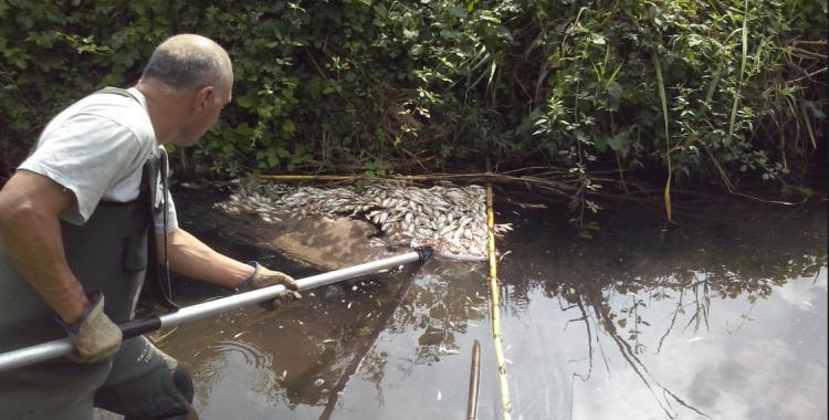 Professional recollint els peixos morts | Ajuntament de Sabadell