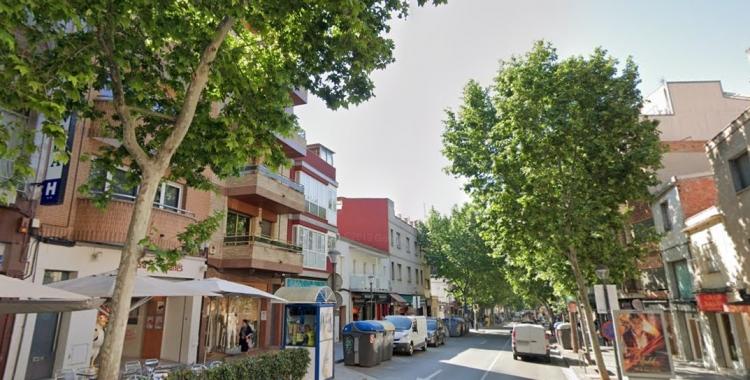 Imatge dels plàtans de la ciutat | Cedida