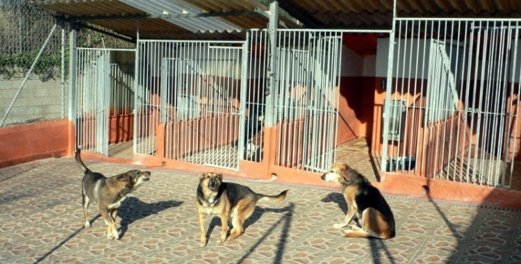 Gossos de la protectora/ Cedida