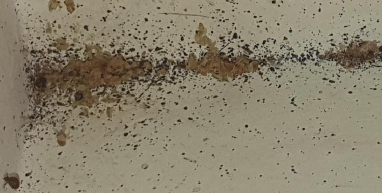 Imatge de les xinxes/ Cedida afectats