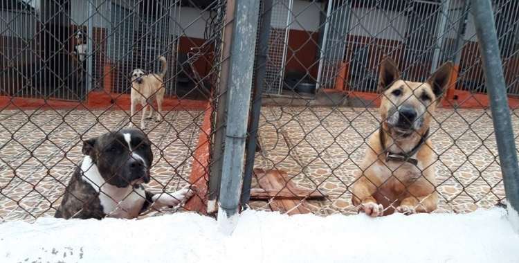 Animals de la Protectora/ Cedida
