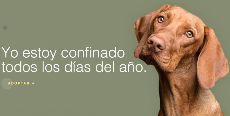 La web coronadogs.ess'encarrega de potenciar el suport en línia per la Protectora | Cedida