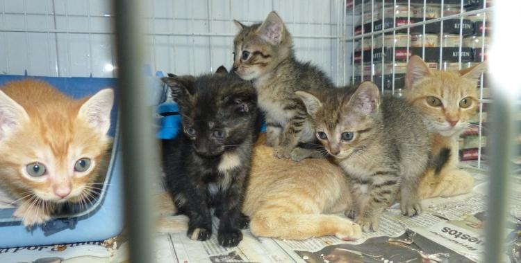 Comencen els tràmits per licitar un nou contracte de serveis del refugi d'animals   Cedida