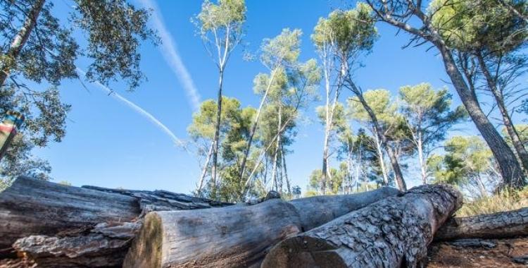Imatge del bosc de Can Deu   Roger Benet (Arxiu)