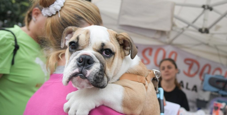 Un gos durant un dels actes animalistes de la ciutat/ Roger Benet