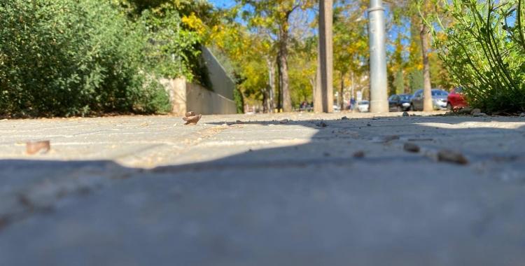 La dona es va accidental amb aquests caragols de la vorera del carrer de Malta | Cedida