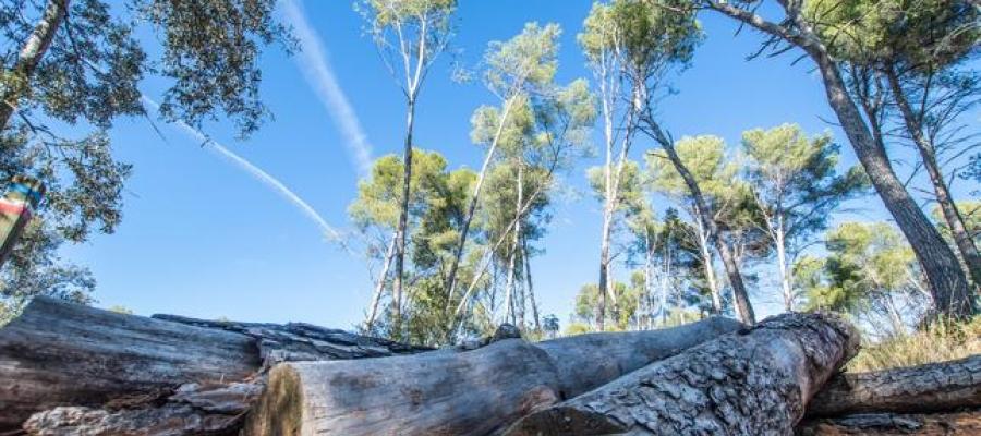 Imatge d'uns troncs a terra al bosc de Can Deu | Roger Benet