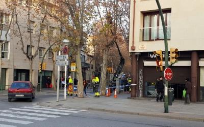 Comença la poda de gairebé 600 plataners de l'eix central. Els primers treballs es fan a l'avinguda Onze de setembre - © Núria García