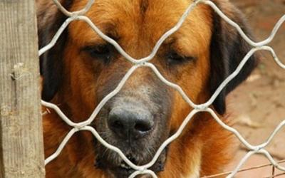 Gran part dels informes estan relacionats amb gossos potencialment perillosos | Arxiu
