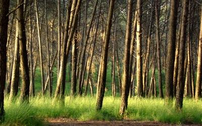 El bosc de Can Deu | Viquipèdia