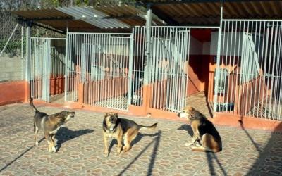 Imatge de tres gossos de la Lliga Protectora | Cedida