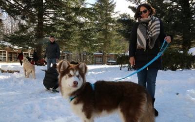 Gossos amb els seus propietaris a Santa Fe del Montseny | ACN