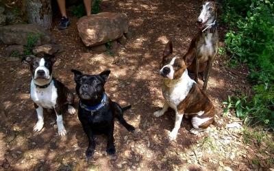 Alguns dels gossos PPP de La Lliga Protectora d'Animals de Sabadell