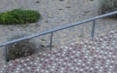 Captura d'un vídeo d'una rata al Parc d'Odessa/ Cedida
