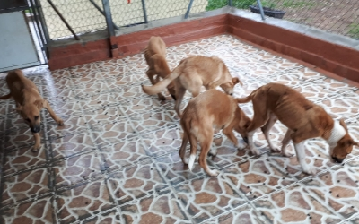 Els sis cadells abandonats un cop han arribat a la Protectora   Cedida