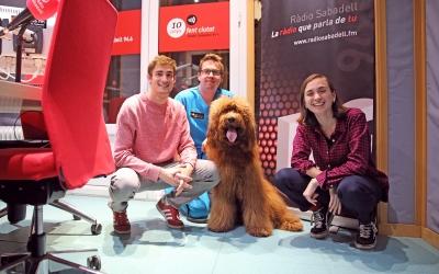 Gerard Romagosa i el gos Maxi als estudis de Ràdio Sabadell amb els redactors Aleix Graell i Helena Molist | Cedida