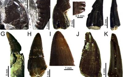 Fòssils trobats al jaciment del Molí del Baró/ ACN