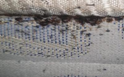 Matalàs infectat amb xinxes | Cedida