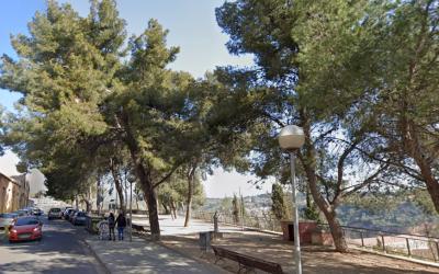 L'Ajuntament substituirà els exemplars de pi blanc del carrer de Santa Teresa per evitar accidents a la via urbana | Google