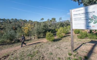 Jornades de reforestació | Roger Benet Arxiu