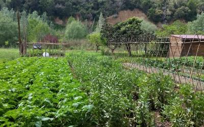 L'Ajuntament i la UAB implementaran un projecte d'agricultura urbana i tradicional a la ciutat | Cedida