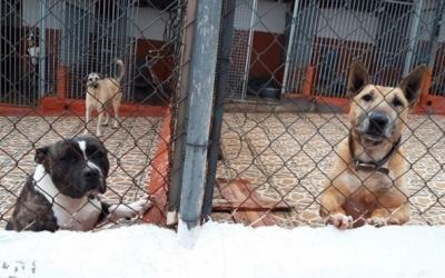 Animals de la Protectora | Cedida
