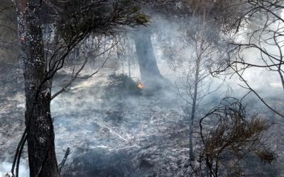Un incendi forestal/ ACN