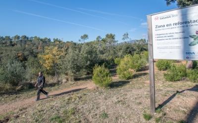 El bosc de Can Deu podria quedar inclòs dins del Parc Natural de Sant Llorenç | Roger Benet