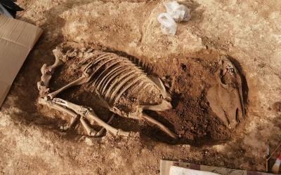 Fosses d'enterrament d'animals localitzades a Can Llong | Genís Ribé (Cedida)