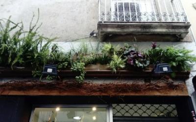 Una de les instal·lacions al carrer de Gràcia | Jardins Vegetals
