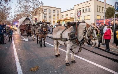 Els carruatges i cavalls no ompliran els carrers com l'any passat | Roger Benet
