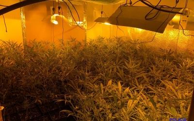 Decomís de 200 plantes de marihuana al carrer Antilles | Policia Municipal