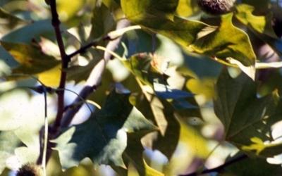 Un arbre en època de floració/ Arxiu