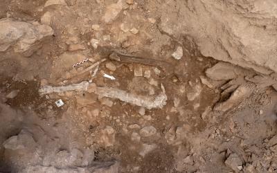 Vista general de les restes humanes documentades: coxal, fèmurs, tíbia, radi, cúbit i peroné | UAB