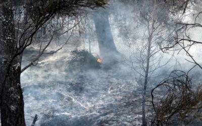 Un bosc cremat/ Arxiu