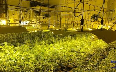 Imatge del local on s'han decomissat les plantes/ Policia Municipal