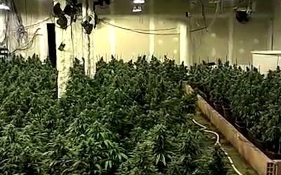 El clan familiar de Can Deu va blanquejar més de 3 milions d'euros amb marihuana | Mossos